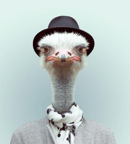 Animals Wear Human Clothing
