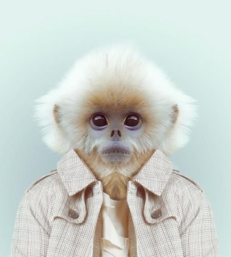 Zoo Fashion