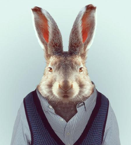 Animals Wear Clothes