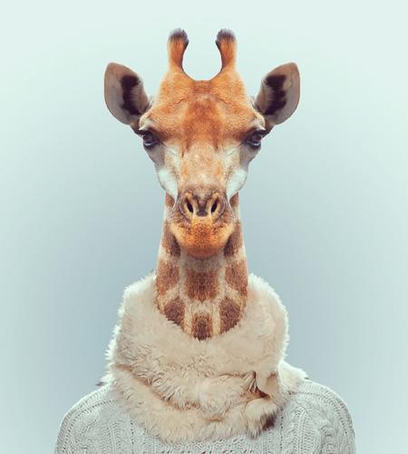 Zoo Animals Fashion