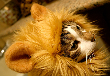 Lion Hats for Cats