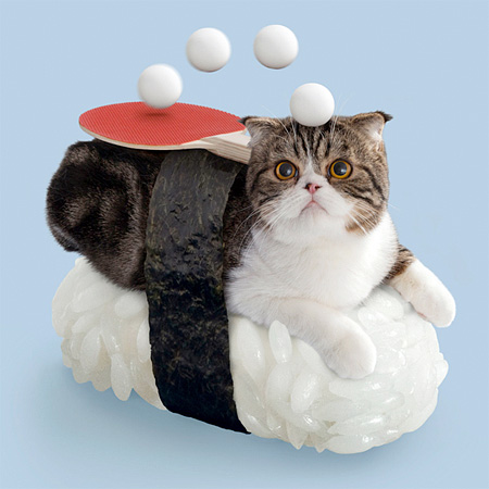 Sushi Cat from Japan