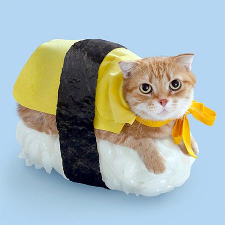 Cats Sushi