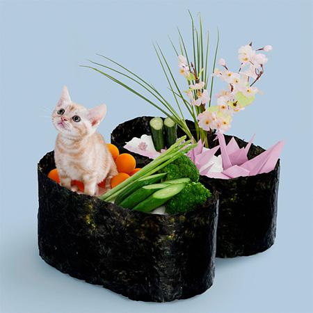 Japanese Sushi Cats