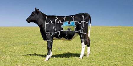 Art Painted on Cows