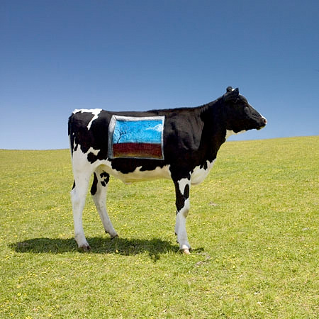 Camping Beds For Tents >> Art Painted on Cows