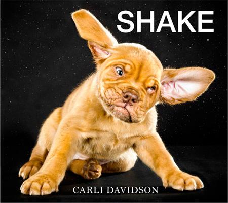 Dogs Shake