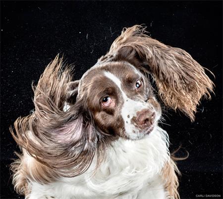 High Speed Dog Photography