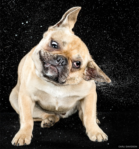 High Speed Pet Photography