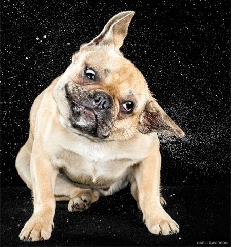 High Speed Pet Photography