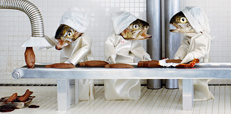 Creative Photos of Fish Heads