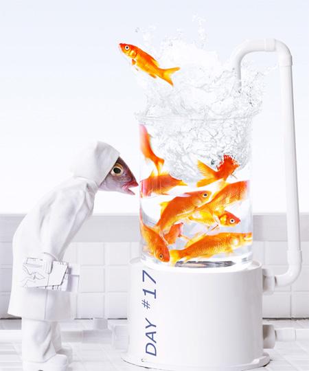 Creative Fish Photography