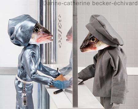 Creative Photos of Fish