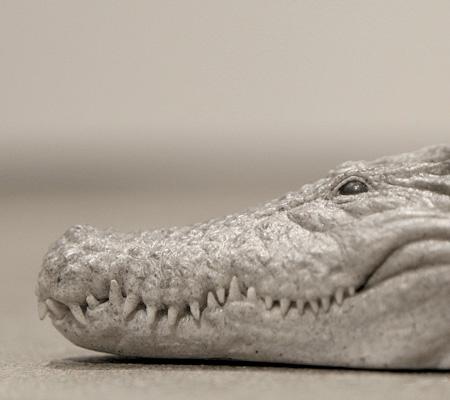Alligator Heels