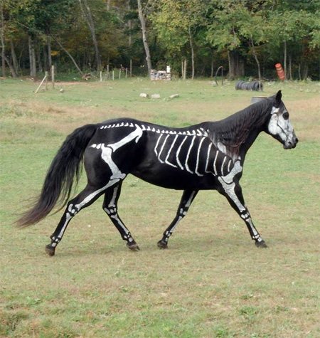 Skeleton Horse for Halloween