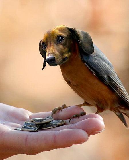 Dog Birds