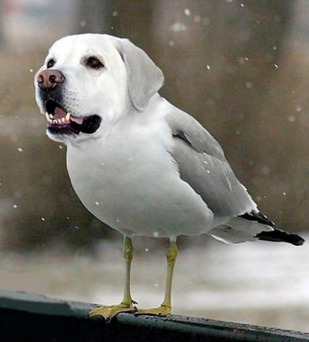 Dogs Birds