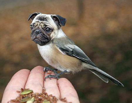 Birds Dogs