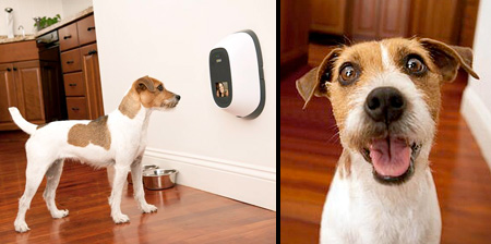 Video Phone for Cats and Dogs