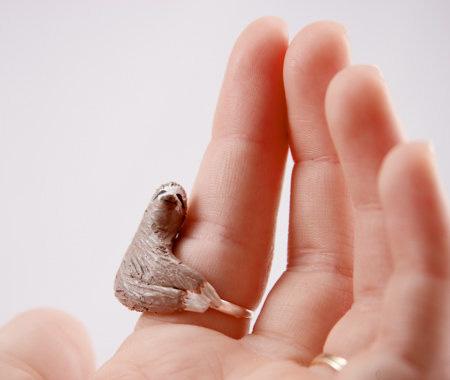 Finger Sloth