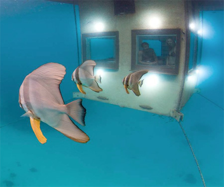 The Manta Underwater Room