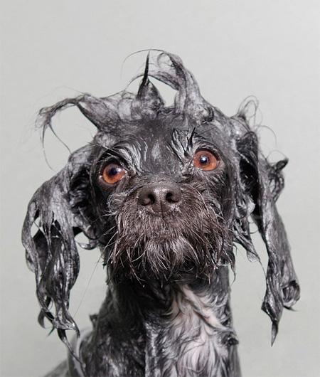 Dog Photographer Sophie Gamand