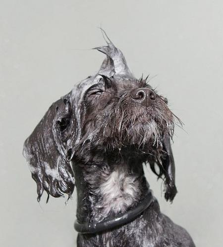 Wet Dog Series