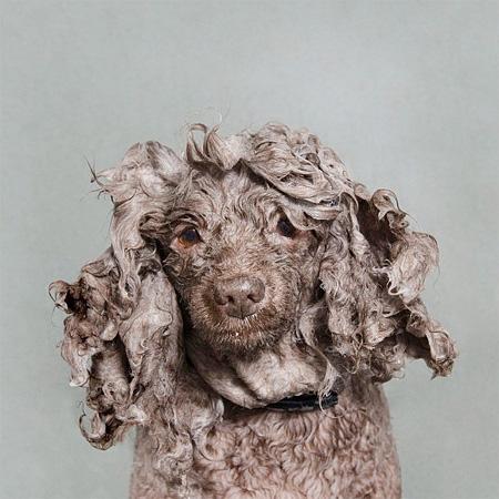 Dog Washer