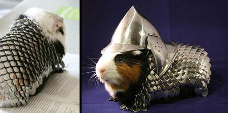 Guinea Pig Armor
