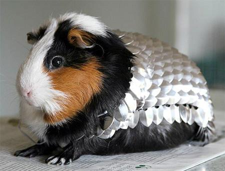Guinea Pig Knight Armor