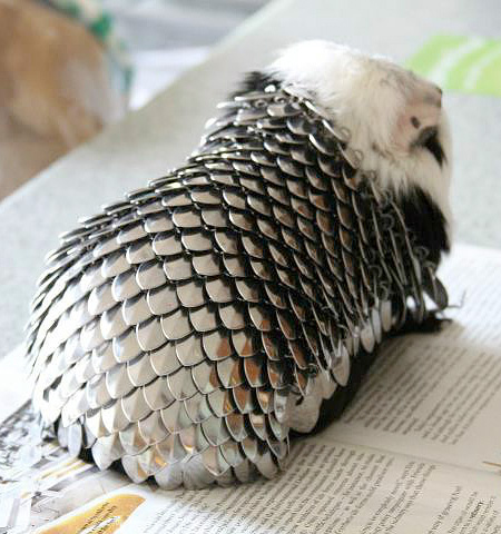 Guinea Pig Knight Armour