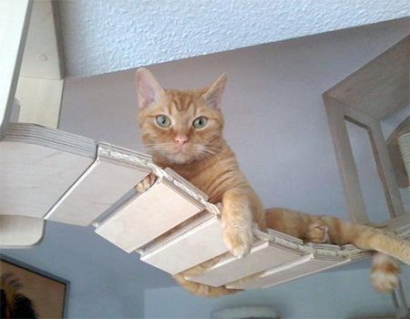 Modular Furniture for Cats