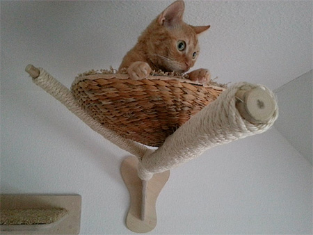 Cat Platforms