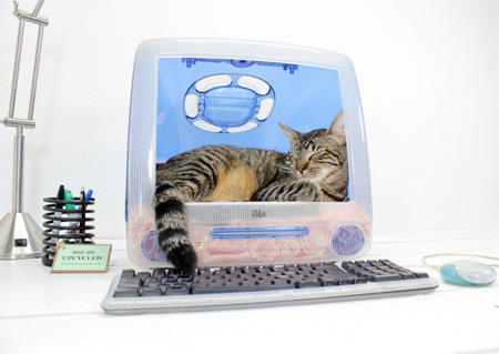 Apple Pet Bed