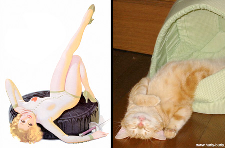 Cats Look Like Pin Up Girls
