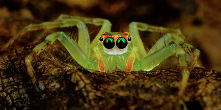 Close Up Photos of Spiders