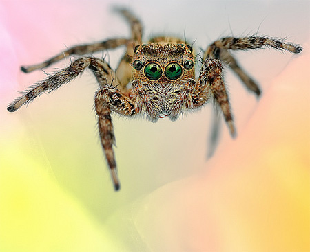 Beautiful Photos of Spiders