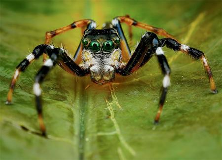 Amazing Photos of Spiders