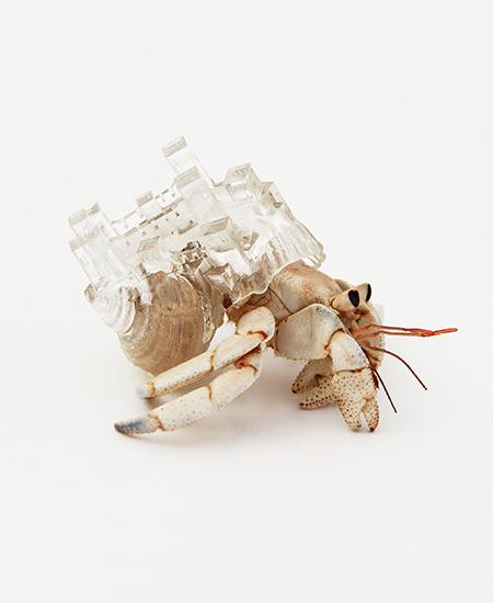 3D Printed Crab Shells