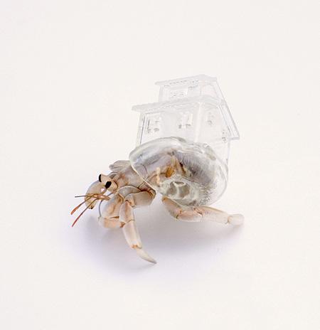 Hermit Crab Shelter
