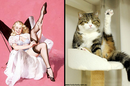 Cats Who Look Like Pin-Up Girls