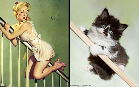 Pin-Up Cats Rachael Aslett