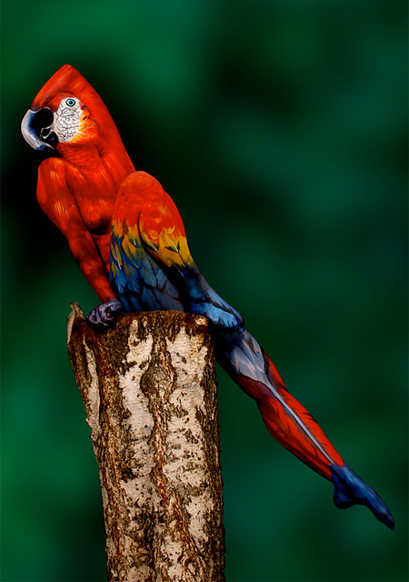 Parrot by Johannes Stotter