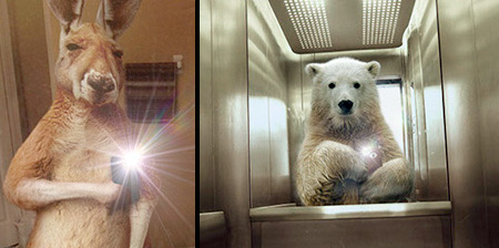 Animal Selfies