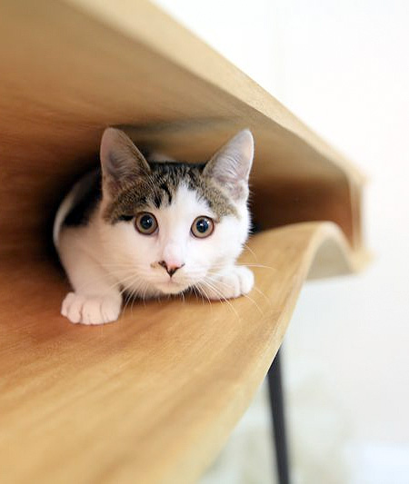 Cat Playground Table