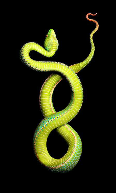 Beautiful Photos Of Snakes