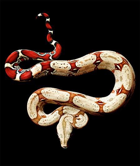 Mark Laita Snake