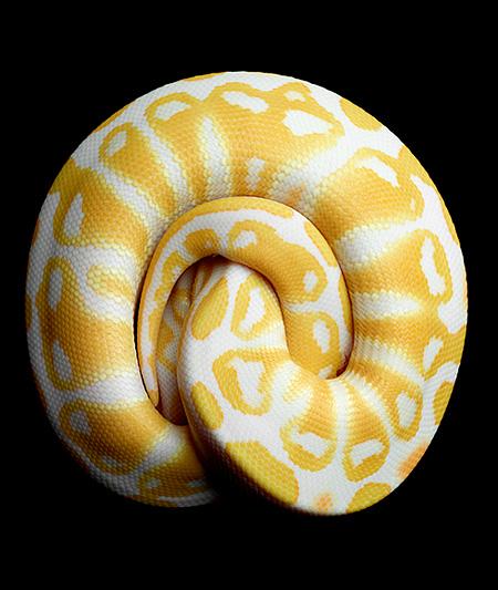 Mark Laita Snakes