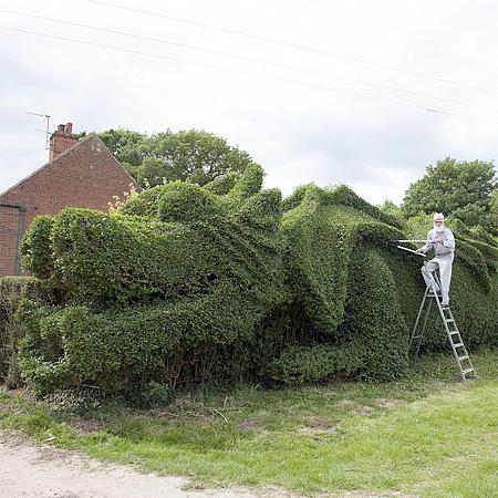 John Brooker Dragon Hedge
