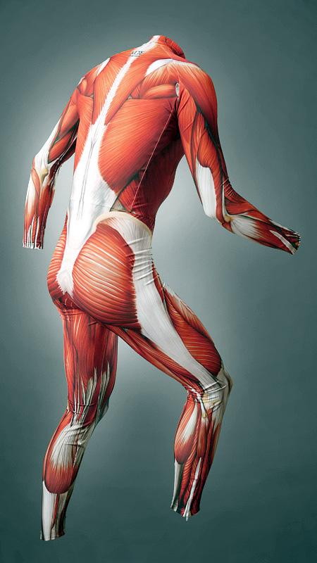Muscles Suit